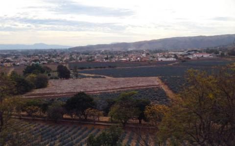 A Trip to Tequila - The Birthplace of Agave Spirits